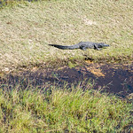 20170704_Southern Africa 0210